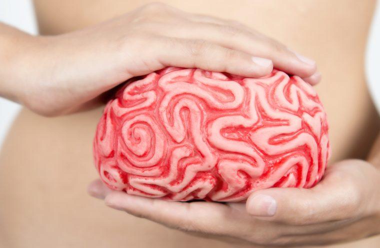 El estudio de la microbiota será objeto de un master en CIUN